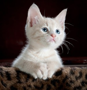 latest cute kitten pictures