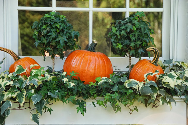 Pumpkins for Halloween Decoration
