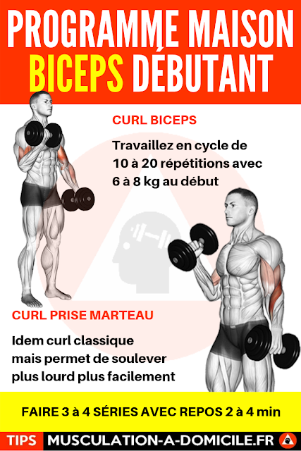 musculation à domicile programme musculation débutant poids du corps et haltère biceps avants-bras