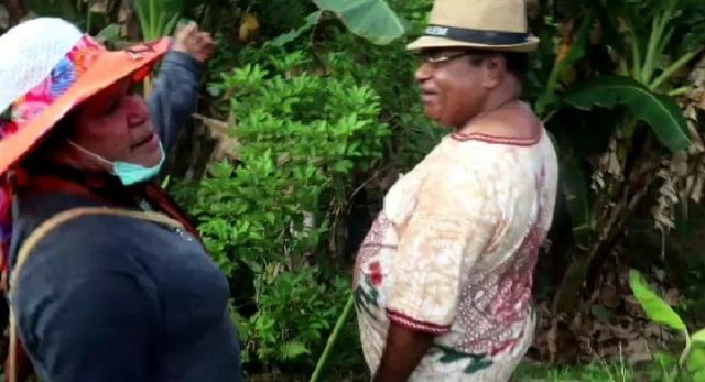 Panen hasil kebun,Wali Kota Sorong dan Ketua DPRD  di Tengah Wabah COVID-19