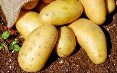 Gambar kentang