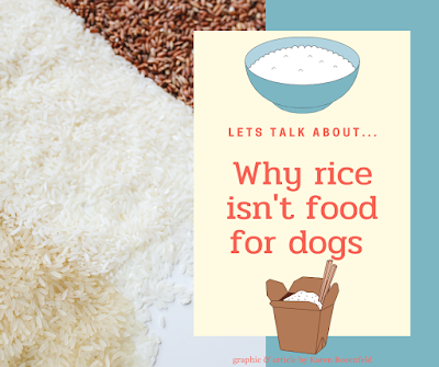 Rice is not good for dogs and cats