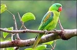 एक तोता और मैना की प्रेम कहानी Ek Tota aur Maina ki prem kahani