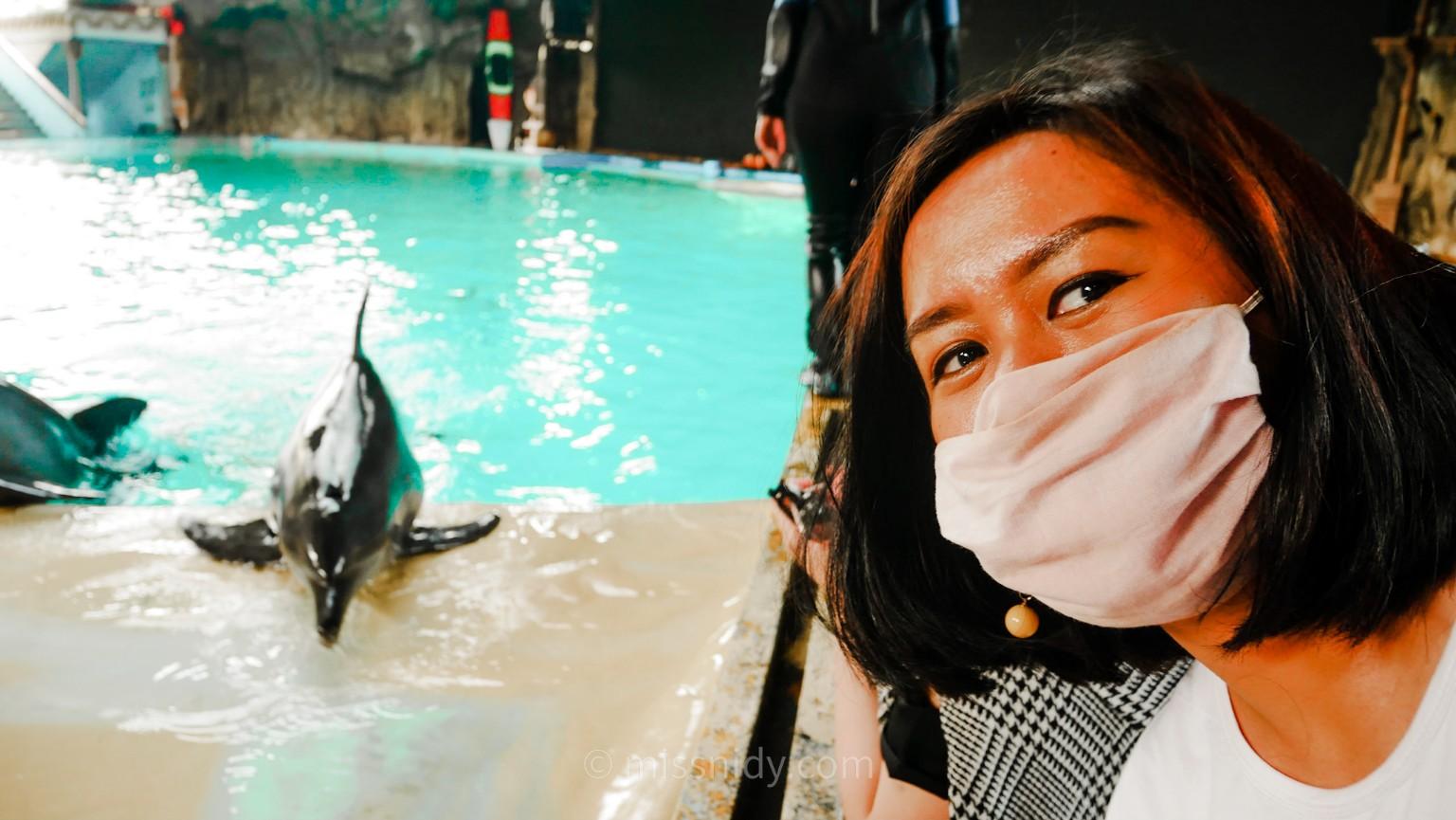 pertunjukan lumba-lumba di ancol