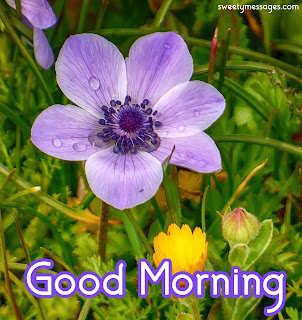 images of good morning