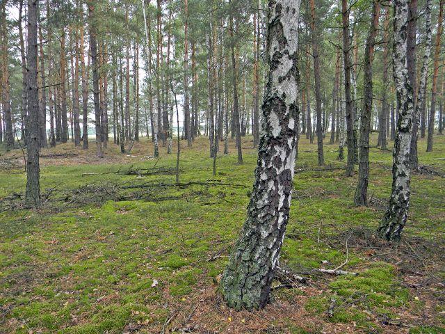miejsca gdzie rosną grzyby, lasy lubuskie