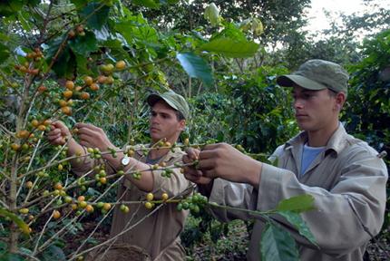 cuba-polemica-agricultura-rural-desarrollo-tierra-propiedad-debate