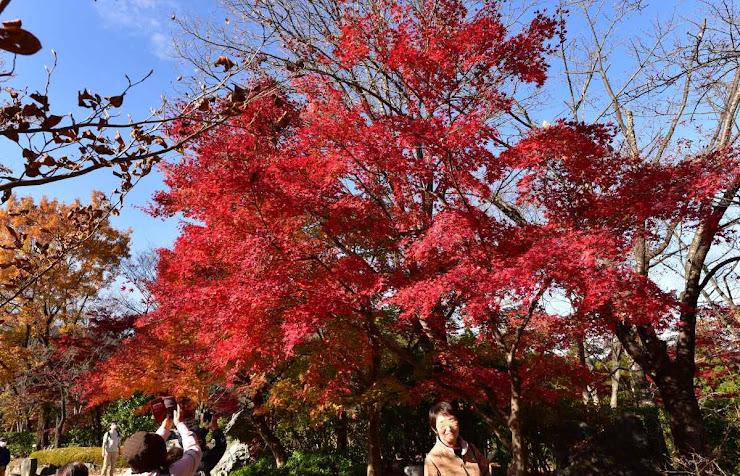 桜山公園の紅葉8