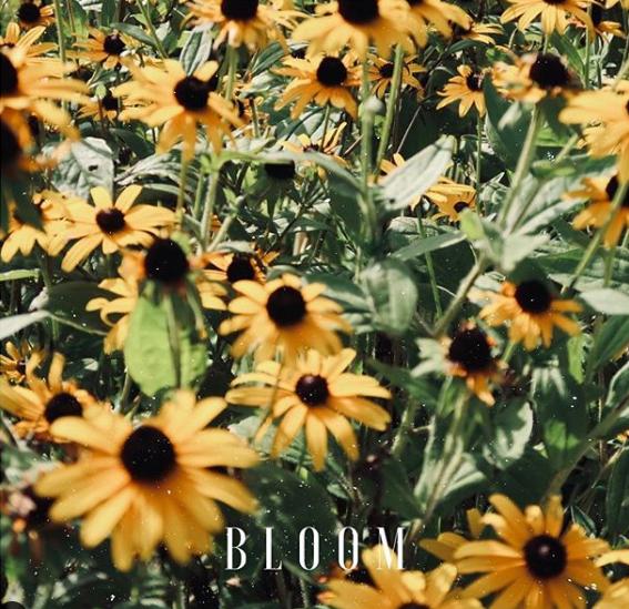 In Full Bloom: Listen to Habit Blcx's 'BLOOM' ft. Rome Castille & Evrywhr