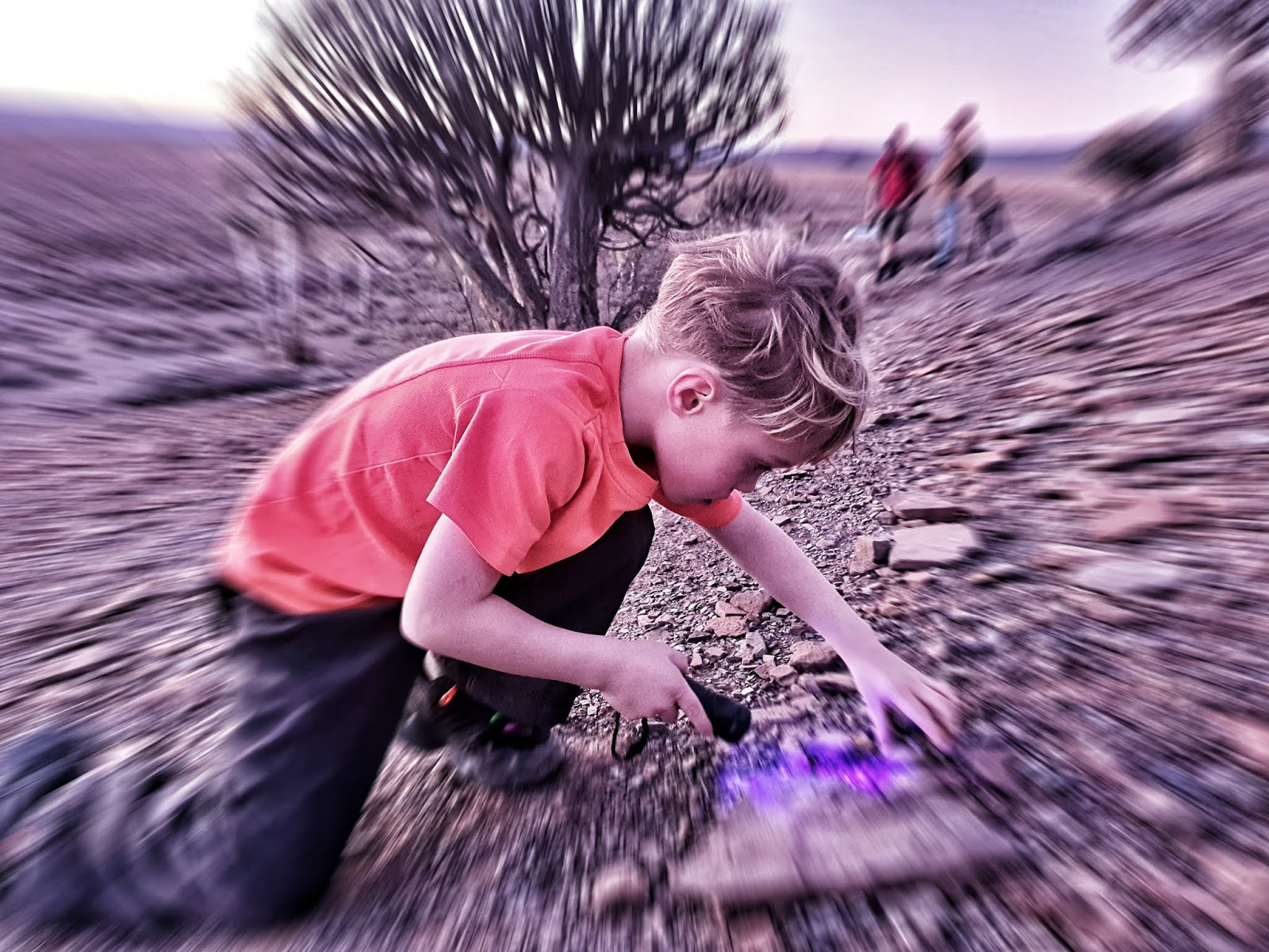 Gannabos, Quiver tree forest, Nieuwoudtville, Alex Aitkenhead, South Africa, Northern Cape, West Coast Flowers, Bulb Capital of the world, Aloe Dichotoma, Star Trails, Celestial Photography, African sunset, African Desert, Star Photography,  Samsung Note 10, Canon
