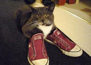 靴が大好きな可愛い猫6