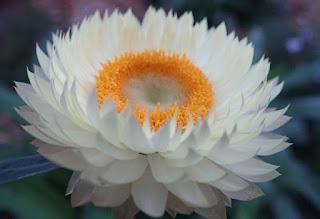 a paper daisy