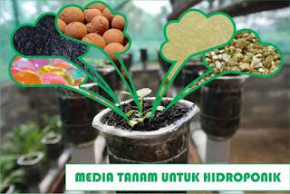 MEDIA TANAM, MEDIA TANAM HIDROPONIK