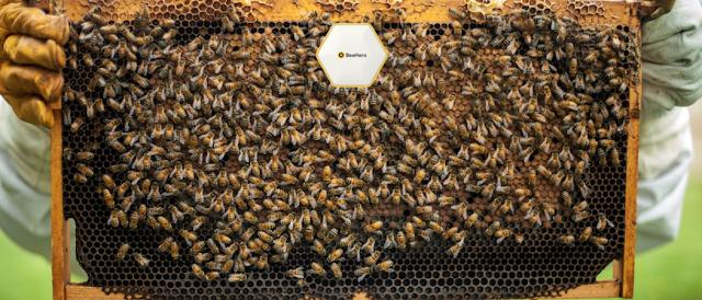 teknologi dengungan lebah madu.png