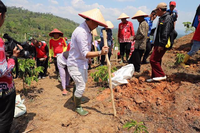 Lampung Barat Kembangkan 1.105 Hektar Tanaman Kedelai