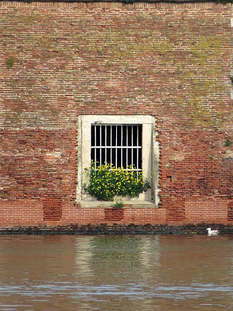 Window with flowers, Fortezza Vecchia, Livorno