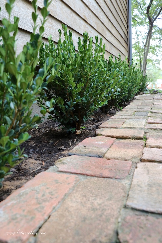 fall front entry garden AFTER landscaping with boxwood shrubs