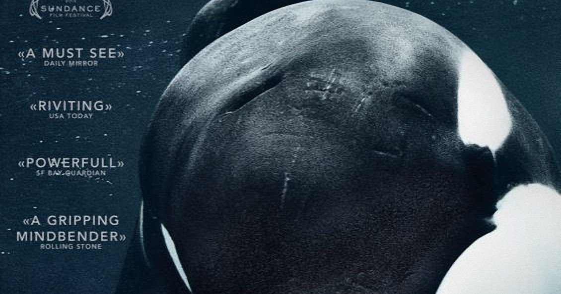 Vagebond's Movie ScreenShots: Blackfish (2013) - photo#20