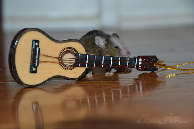 A rock in roll mouse with his guitar