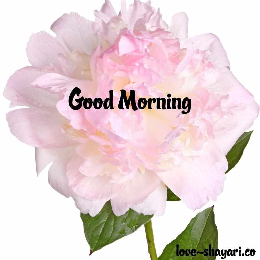 beautiful nature good morning