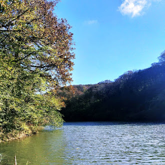 Lake Edge, Forest, Beautiful, Nature, Water's Edge