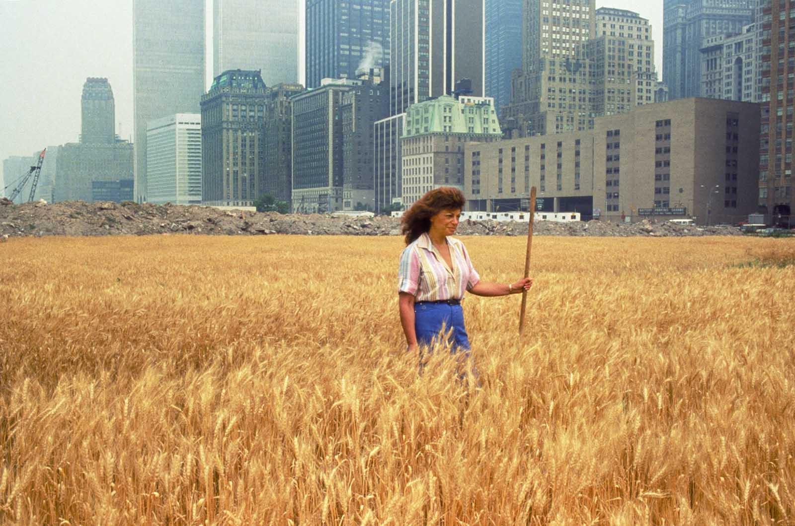 En 1982, Agnes Denes cultivó, creció y cosechó un campo de trigo de dos acres en el centro de Manhattan.