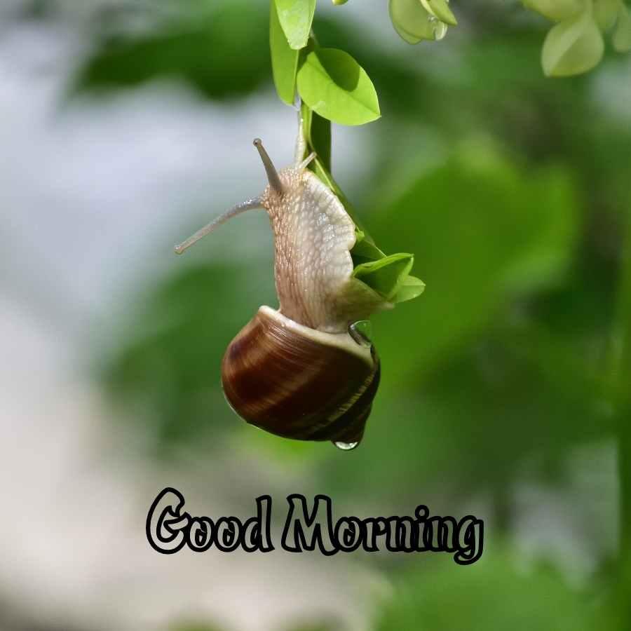 good morning husband image