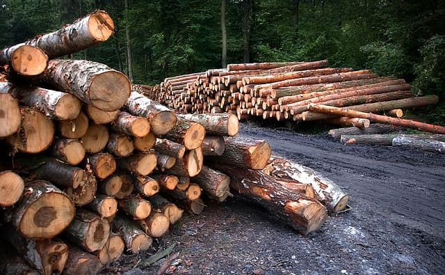 Deforestación - Causas y Consecuencias