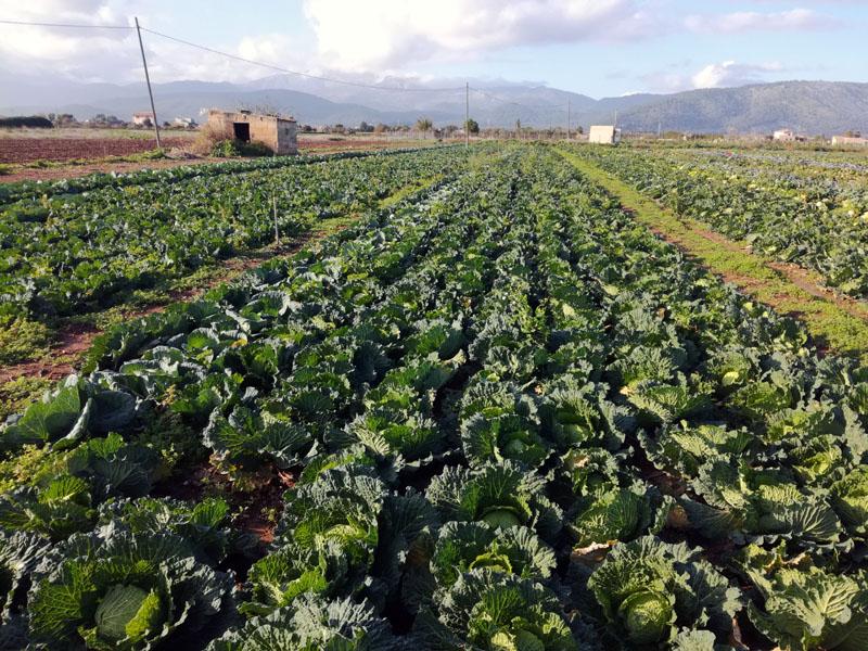 Campi coltivati, 6 dicembre 2019