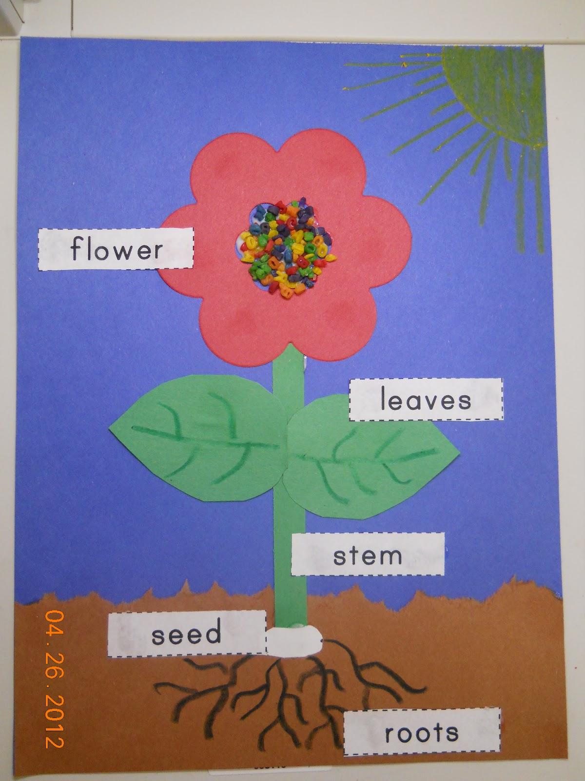 Mrs Whaley S Kindergarten Plants