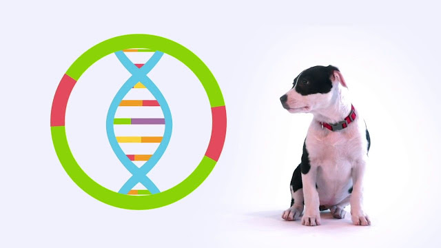 Dog Breed DNA Testing