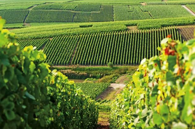 Cinco regiones de vinos espumosos a visitar