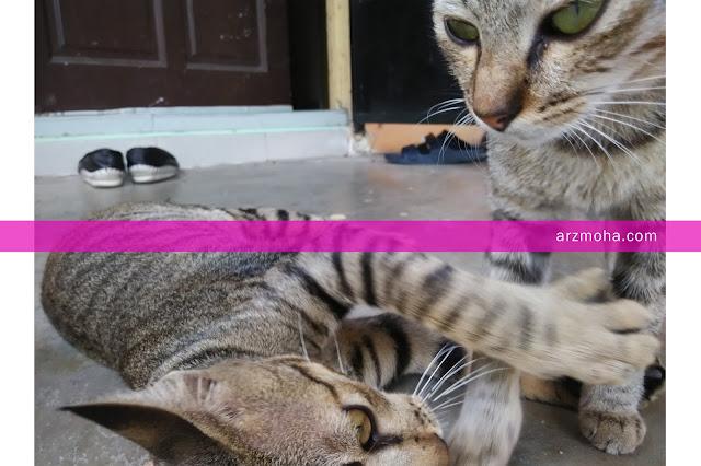 kucing, gambar kucing,