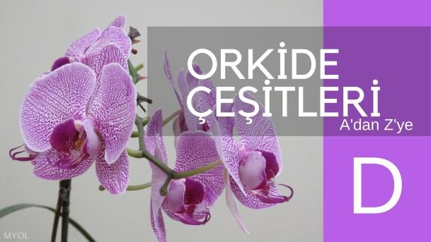 Orkide Çeşitleri D Harfi