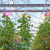 Signify Supports LED Lighting System to US-based AppHarvest