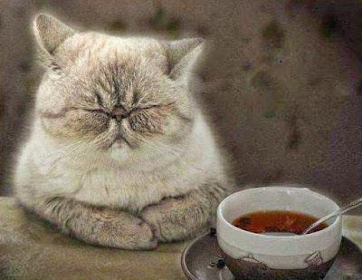 de-motivierende Bilder - müde Katze am Tisch lustig