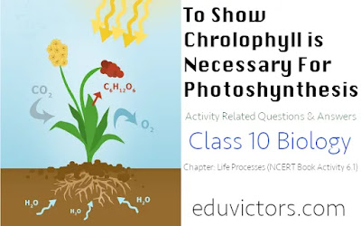 CBSE Class 10 Biology - Questions and Answers Related to Activity To Show Chlorophyll is Necessary For Photosynthesis (#class10Biology)(#class10Science)(#eduvictors)