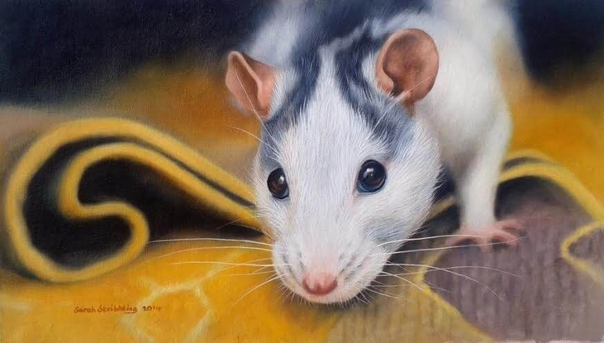13-Rat-Sarah-Stribbling-A-Wildlife-and-Pet-Portrait-Artist-www-designstack-co