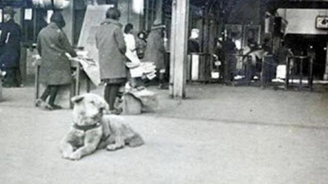 Sejarah Hachiko, Anjing yang Setia