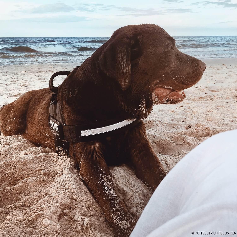 wakacje z psem na plaży dla psów w dębkach nad morzem