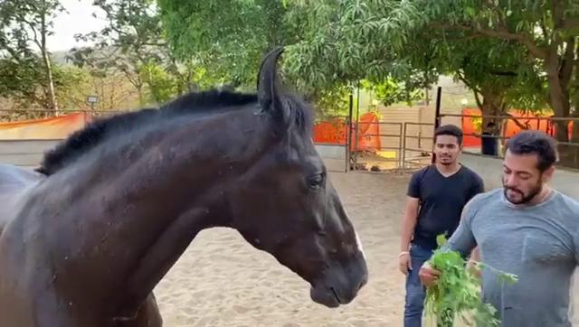 """क्वारंटाइन के समय में घोड़े को घास खिला रहे है सलमना खान, पोस्ट शेयर करते हुए लिखा """"मेरे प्यार के साथ नाश्ता"""""""