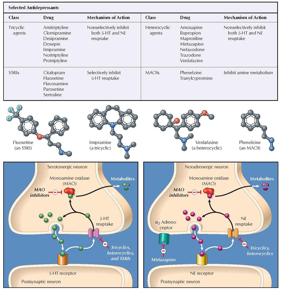 Antidepressants: Mechanisms of Action