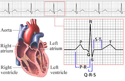 What is ECG, ECG Reading,Norma and Abnormal ECG