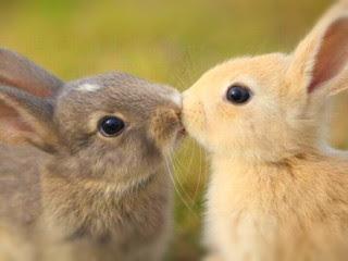kelinci-jantan-dan-betina.jpg