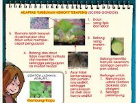 Sebutkan dan Jelaskan Ciri-ciri Tumbuhan Hidrofit