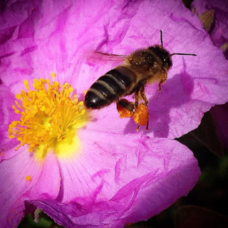 El reto es difícil porque con la llegada de las  políticas europeas las tiendas familiares  españolas están, igual que las abejas,  en peligro de extinción.