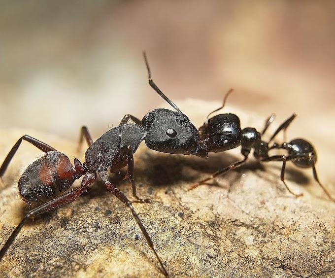 Tilosban jártak! Élő hangyákat találtak a vámosok egy csomagban