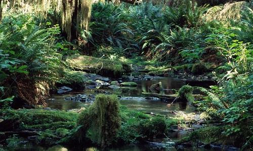Yağmur Ormanları Hangi Ülkede