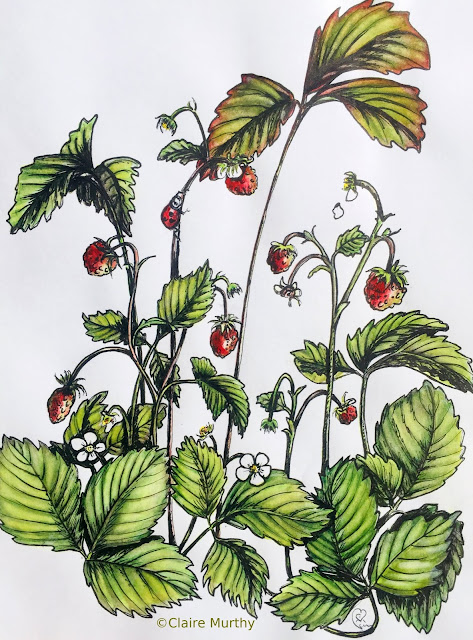 Wild Strawberries in the Kitchen Garden - Watercolour and Ink.