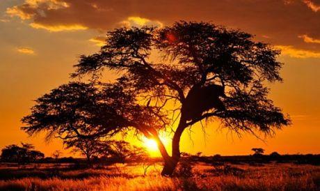 Desierto del Kalahari